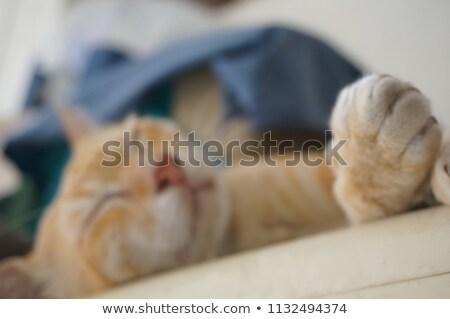 csinos · fiatal · nő · alszik · fehér · ágy · hosszú · haj - stock fotó © pressmaster
