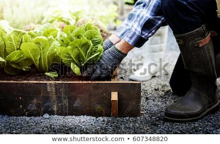 couple · légumes · homme · paysage · vie - photo stock © is2