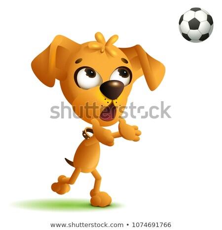 funny yellow dog goalkeeper catches soccer ball stock photo © orensila