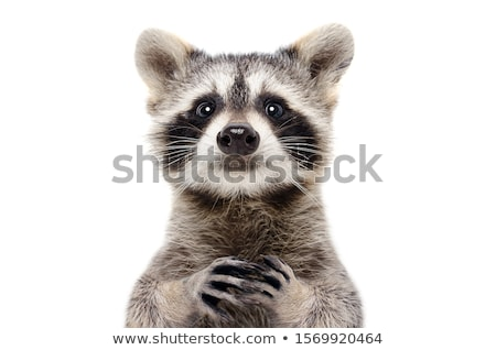 Cute Wild Animals on White Background Stock photo © bluering