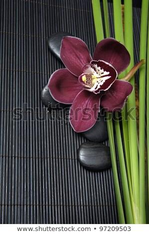 bamboe · stengel · zwarte · stenen · spa · gelukkig - stockfoto © Epitavi