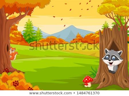 Cartoon белку иллюстрация молодые животного Top Сток-фото © cthoman
