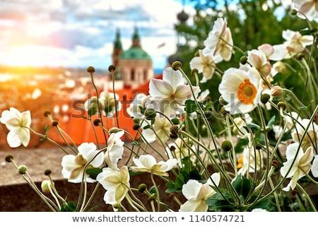 rosso · tetti · Praga · casa · città - foto d'archivio © givaga