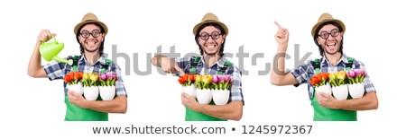 Jovem engraçado jardineiro tulipas regador isolado Foto stock © Elnur