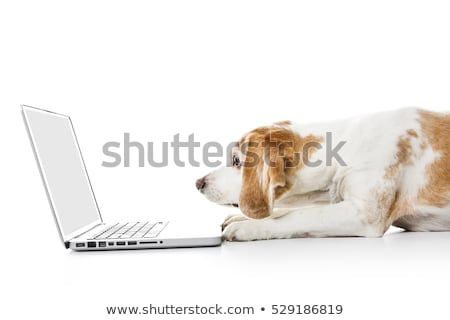 Beagle chien ordinateur isolé blanche internet Photo stock © Lopolo
