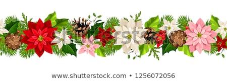 frame of pink poinsettia flower or christmas star Stock photo © neirfy
