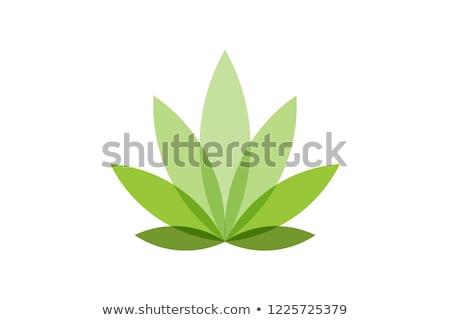 Stok fotoğraf: Yeşil · kenevir · yaprak · ikon · yalıtılmış · beyaz