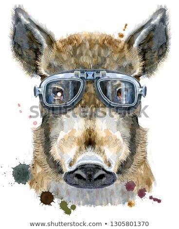 Stock fotó: Watercolor Portrait Of Wild Boar With Biker Sunglasses