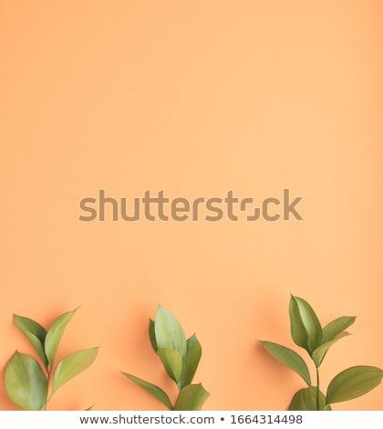 virágzó · barack · közelkép · virágok · kék · ég · fa - stock fotó © marylooo