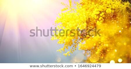 toplama · ağaç · yalıtılmış · beyaz · bahar · çim - stok fotoğraf © neirfy