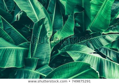 Trópusi pálmalevelek nyár zöld szalag kézzel rajzolt Stock fotó © Artspace