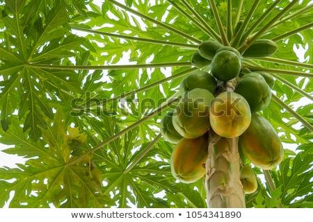 緑 果物 成長 ツリー 草 太陽 ストックフォト © galitskaya
