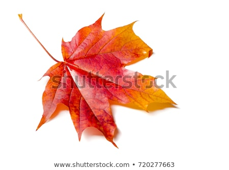 Grapes border with leaves on white background  Stock photo © ElaK