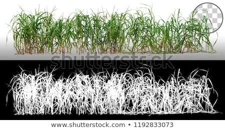 Bokrok fű napos megvilágított növényzet részlet Stock fotó © prill