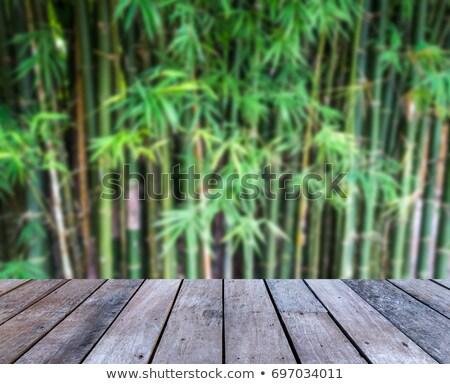 Bambu yeşil orman yumuşak odak Stok fotoğraf © brebca