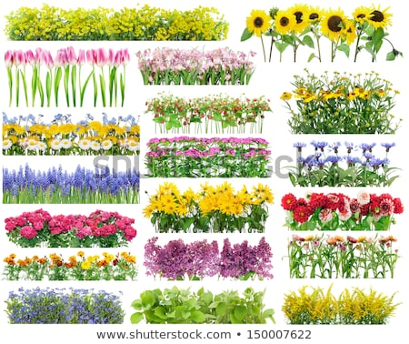 The green flower-bed Stock photo © Traven