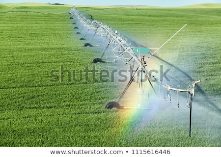 Irrigation rainbow Stock photo © stevemc