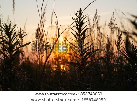 Relaxing in the field Stock photo © photography33