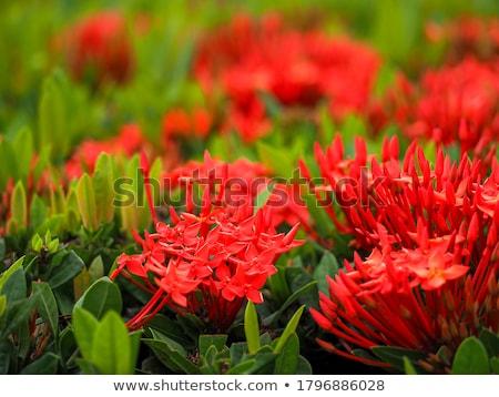 写真 花 フル 咲く ストックフォト © pazham