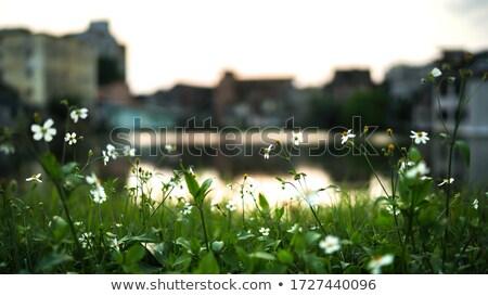 kicsi · folyó · zöld · erdő · tavasz · tájkép - stock fotó © mikko