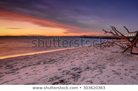 Plata playa Australia botánica piedra Foto stock © lovleah