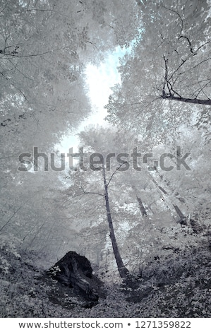 Infrared forest Stock photo © ldambies