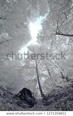 Infravörös erdő kép gyönyörű fa kék Stock fotó © ldambies