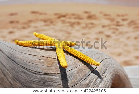 yellow starfish on an old washed out tree trunk on the beach stock photo © nito