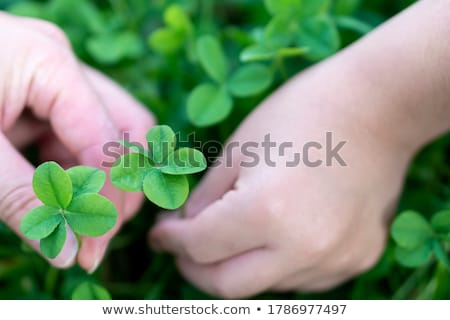 Boy holding green leaf for good luck Stock photo © bluering