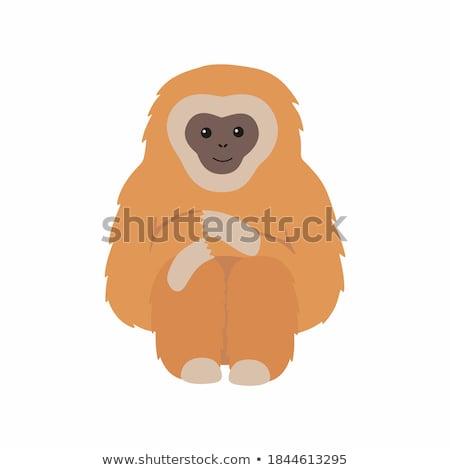 Illusztráció fekete Afrika majom fehér állat Stock fotó © colematt