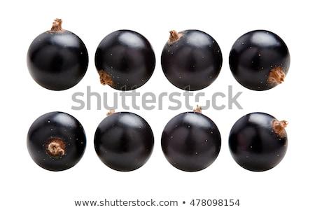 sprig of black currant isolate on white background Stock photo © studiostoks