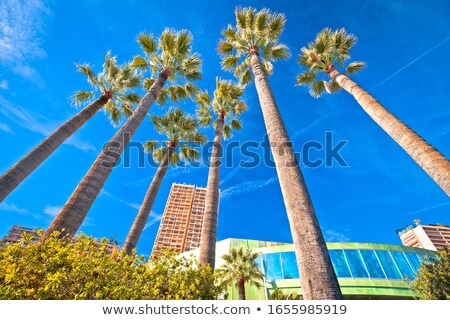 Palm waterfront of Monte Carlo view Stock photo © xbrchx