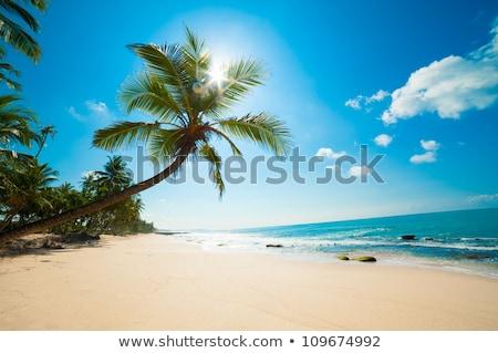 Palmeira Maldivas 24 praia tropical verão dia Foto stock © bloodua
