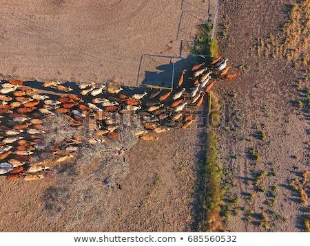 tehenek · magas · testtartás · fa · fű · hegy - stock fotó © razvanphotography