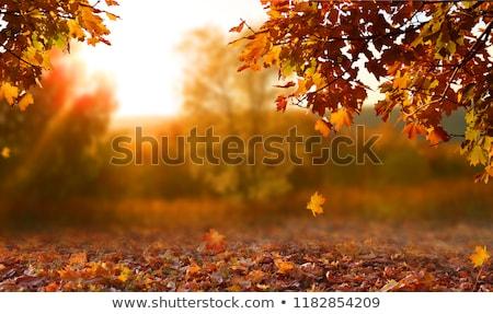 Arce árbol otono parque costa estanque Foto stock © mahout