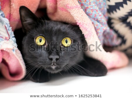 nervous cat Stock photo © taviphoto
