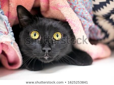 кошки · вверх · смешные · голову · студию - Сток-фото © taviphoto