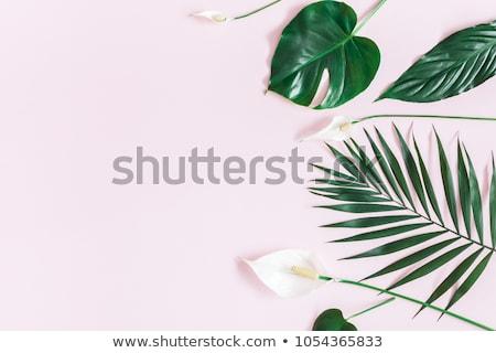 Flor tropical tabela decoração simples tropical Foto stock © travelphotography