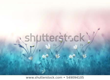 blooming tree with blue sky in forest stock photo © meinzahn