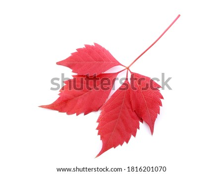 Red brown leaf texture Stock photo © phakimata