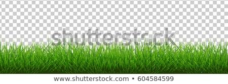 madeliefjes · groen · gras · veel · bloesem · zomertijd · bloem - stockfoto © olandsfokus