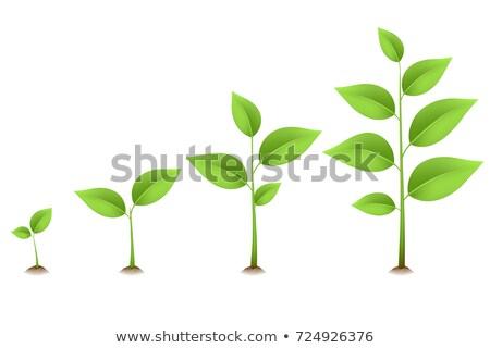 Bruin bonen zaailingen groeiend boeren Stockfoto © olandsfokus