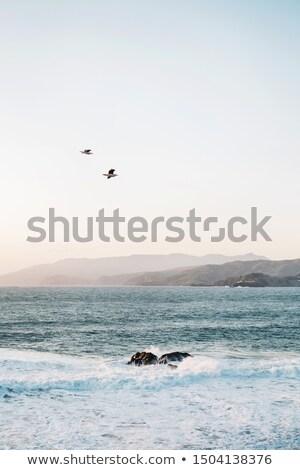 sziget · naplemente · háttérvilágítás · San · Francisco · Kalifornia · USA - stock fotó © yhelfman