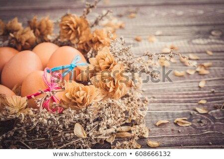 гнезда · яйца · цветы · Пасху · весенние · цветы · весны - Сток-фото © zerbor