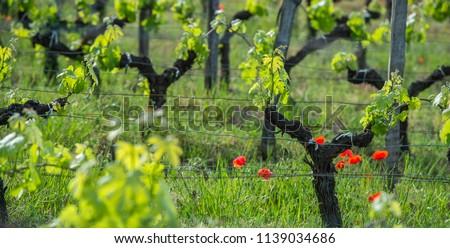 Jovem ramo céu pôr do sol Foto stock © FreeProd