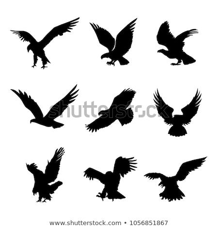 実例 鳥 翼 飛行 かわいい 手袋 ストックフォト © adrenalina