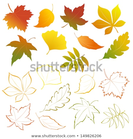 A group of Elegant autumn leaves set Stock photo © Blue_daemon