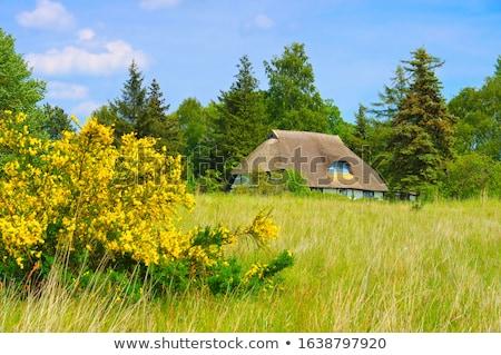 осень · пейзаж · Ганновер · Германия · дерево · древесины - Сток-фото © lianem