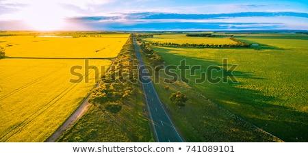 landscape of rapeseed fields stock photo © bbbar