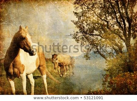landscape and horses on vintage grunge paper stock photo © photocreo